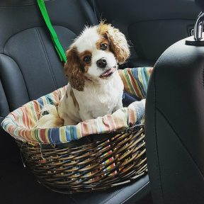 Bella Pet Rescue 1